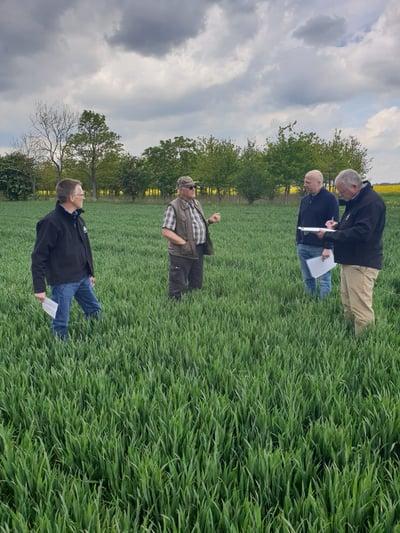 In wheat field