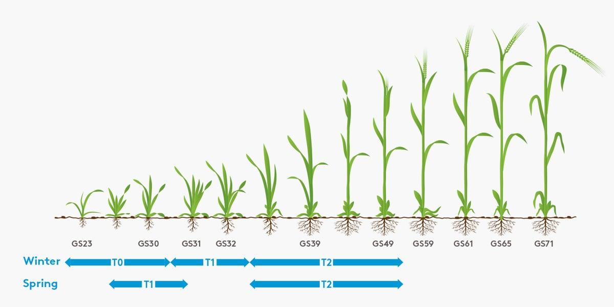Barley Leaf Diagram_900x600 (2)