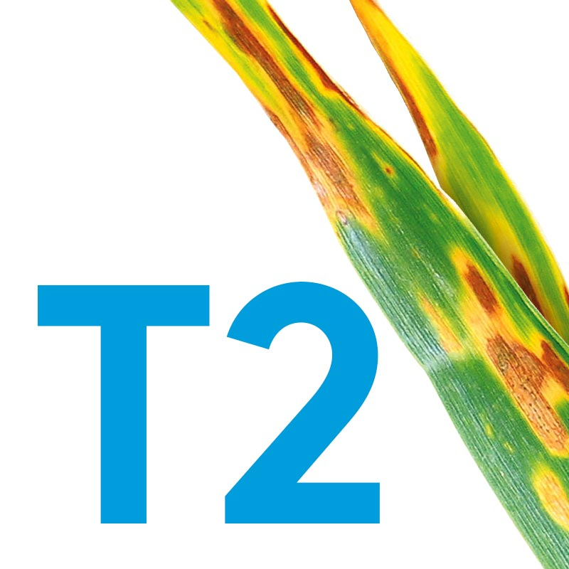 T2-Banner_800x800.jpg