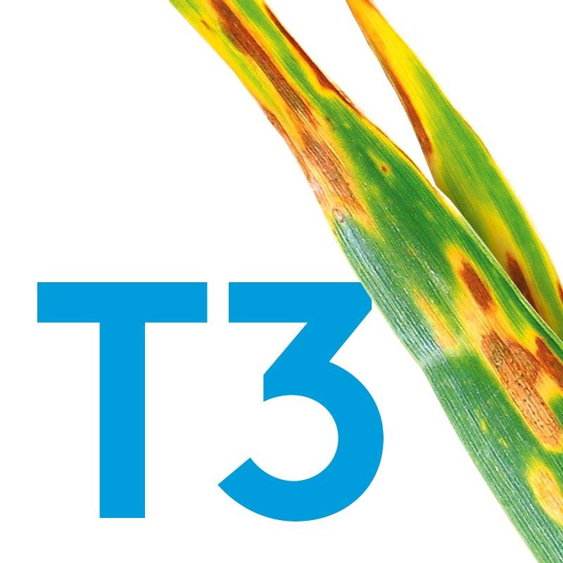 T3-Banner_800x800.jpg
